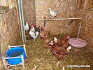 Cheap Poultry Coops
